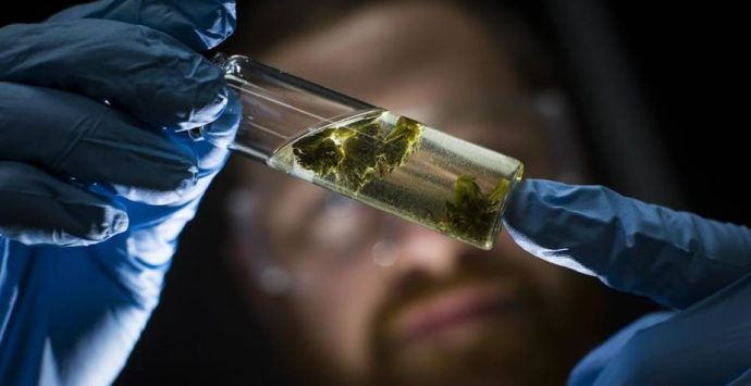New Rules for Lab Testing of Cannabis in Oregon Has Problems 2017 Promises to Be the Year of Solutions to Problems Started in 2016