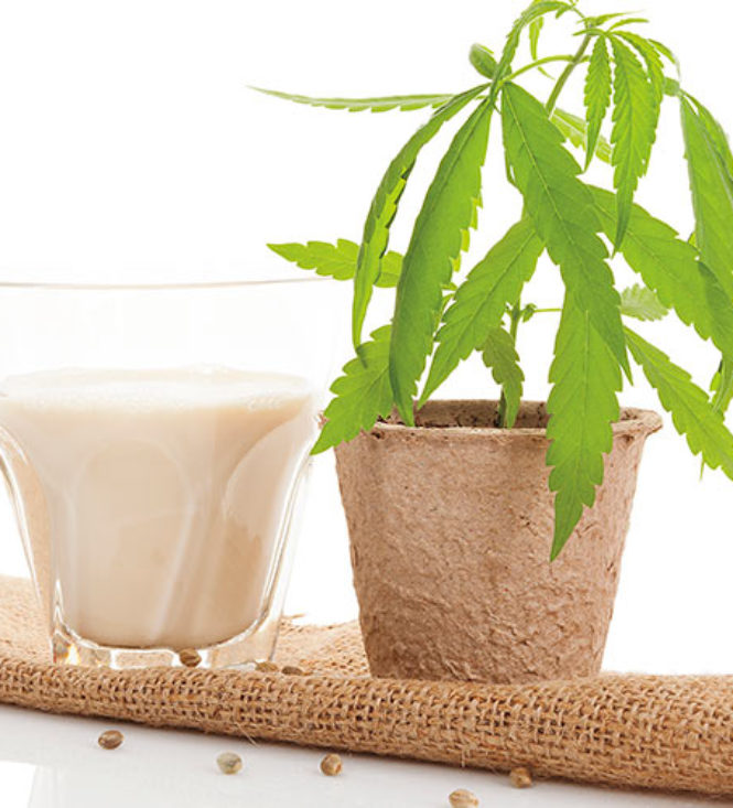 Hemp | Hemp for Healthy Mothers and Healthy Babies