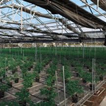 Grow Feature | The Future  Of Cannabis Cultivation