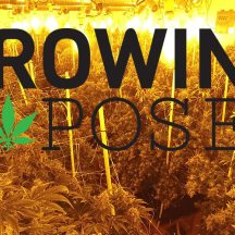 Stoner Cultivation | Growing Exposed | From Seed to Weed